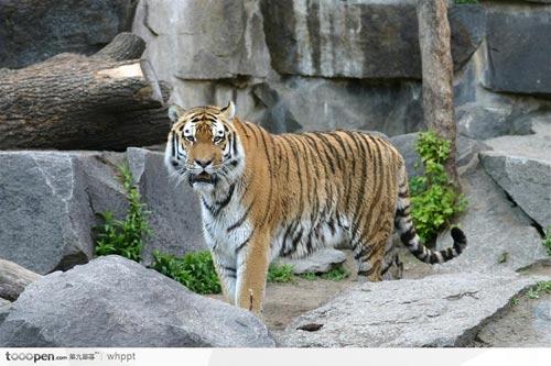 北京动物园大全图片