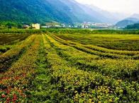 河南淇县古灵山风景区位于县城西北8公里处