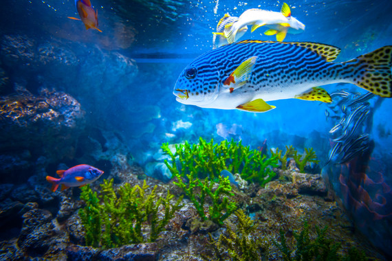 【親子營】【親子時光】海底大轟趴2日游【海底世界晚餐/住宿海底世界/親子互動】