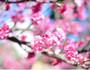 冲绳5日游,冲绳5日游费用-中青旅遨游网