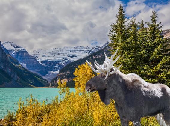 【随心自驾】加拿大温哥华班夫贾斯珀9晚11天自由行【国家公园/冰原大道】