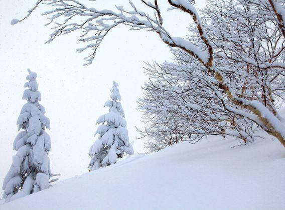 【季节限定】日本北海道道东/道央6日游【温泉尊享/冰雪体验/浪漫小樽】