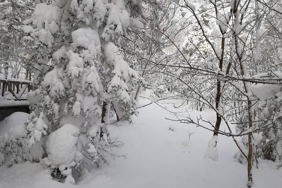 哈尔滨/北极村/大兴安岭/亚布力滑雪双飞双卧6天
