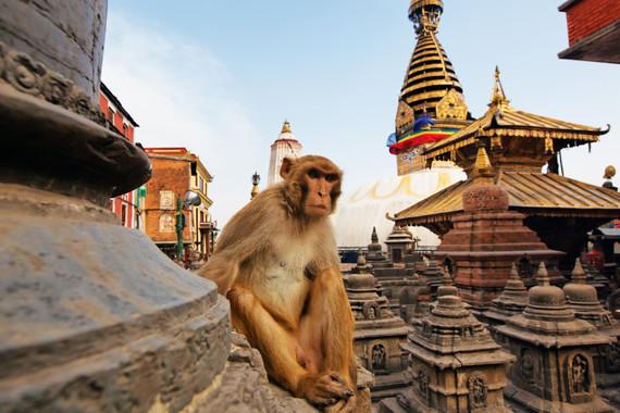 【神奇国度】 印度+尼泊尔 (加德满都进、德里出)9日7晚精华之旅9日游
