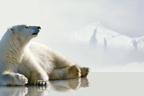 【探索北极,华人包船】北极斯瓦尔巴群岛+罗孚敦群岛 普朗修斯号7日游