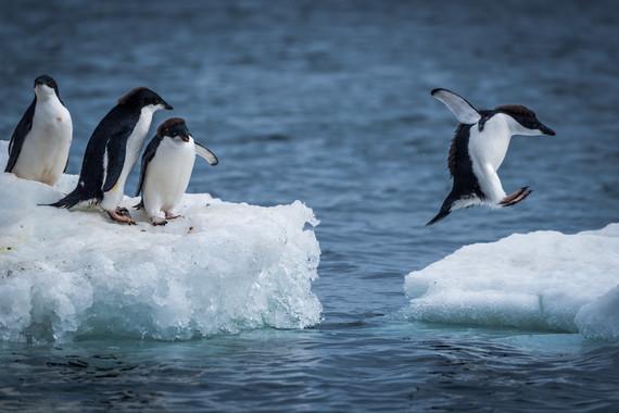 【极客启程,探索南极 摄影团】土耳其+阿根廷+南极 宏迪斯号23日游