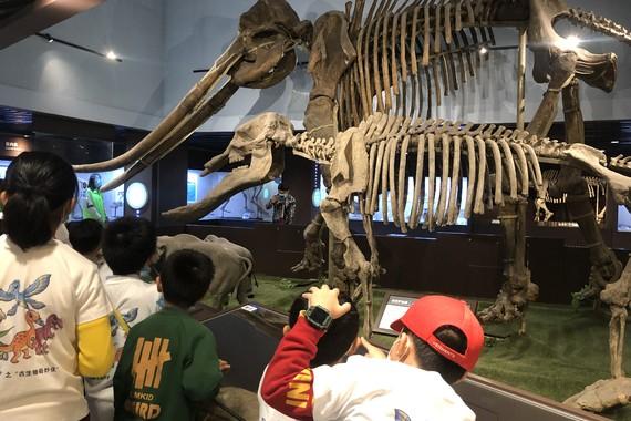 【筍芽兒系列】【中國古動物館】夜宿博物館,與恐龍做鄰居